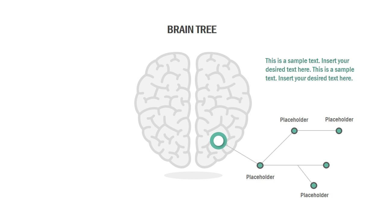 4 Steps Brain Shape Process Design