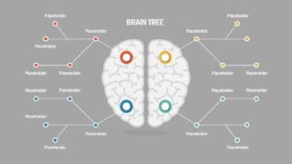 Presentation of Brain Concepts