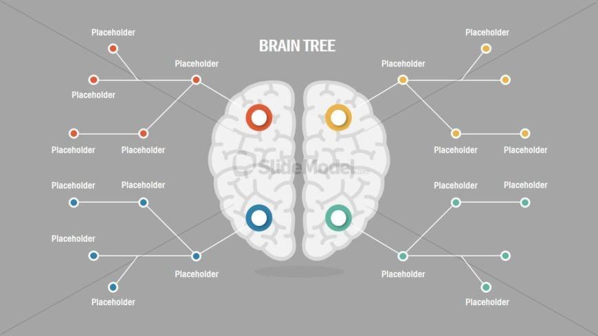 Presentation of Brain Concepts