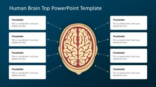Human Brain Top View PowerPoint Template