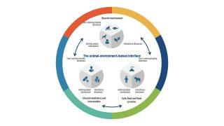 Presentation of One Health Model Diagram