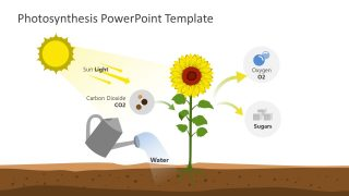 PPT Photosynthesis Science Diagram Templates