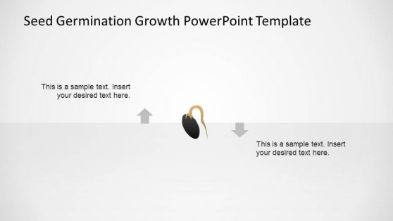 Black Seed Initial Roots Germination Process Timeline