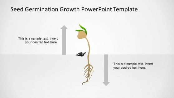 PowerPoint Grown Plant After Germination