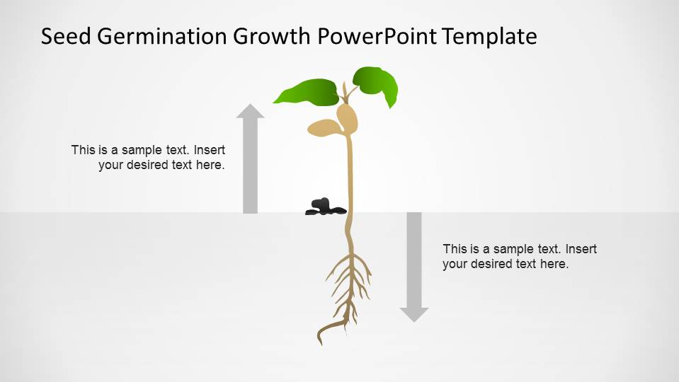 small plant powerpoint shape after germination process