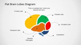 Flat Brain Lobes Cross Sectional Diagram for PowerPoint