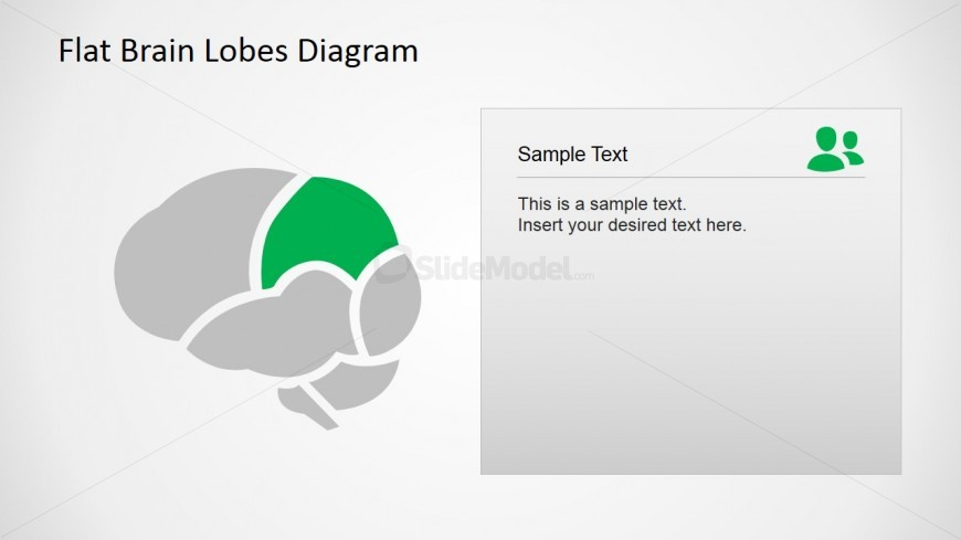 Parietal Brain Lobe PowerPoint Diagram
