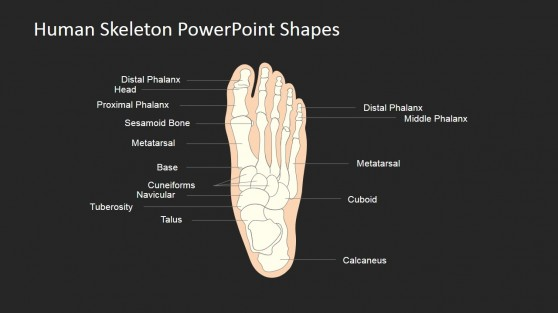 PowerPoint Template for Skeleton Anatomy