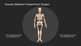 Human Skeleton Diagram Using PowerPoint