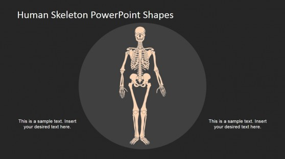 PowerPoint Ideas for Skeleton Model