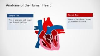 Medicine Presentation in PowerPoint