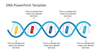 DNA Strands Timeline Design for PowerPoint