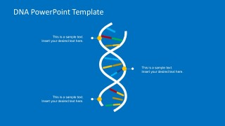 Flat DNA Strand Concept for Organizations PowerPoint