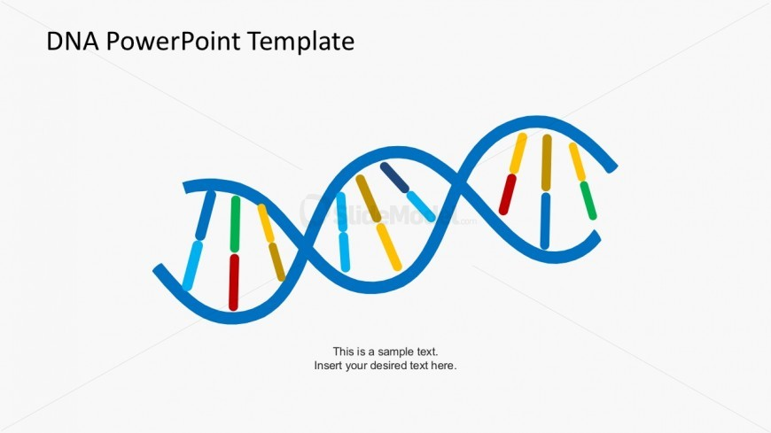 Simple DNA Strands Vectors for PowerPoint - SlideModel