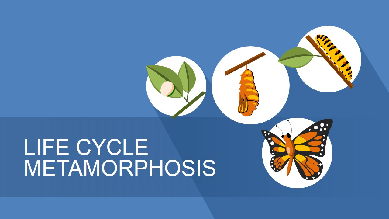 business life cycle metaphor powerpoint