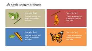 Four Stage Butterfly Metamorphosis Template
