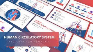 Vector Presentation for Circulatory System