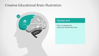 Learn Section Illustration Slide in Human Brain