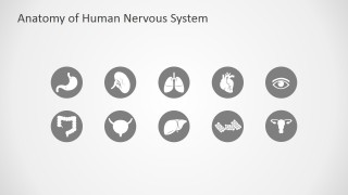 Human Anatomy PowerPoint Templates