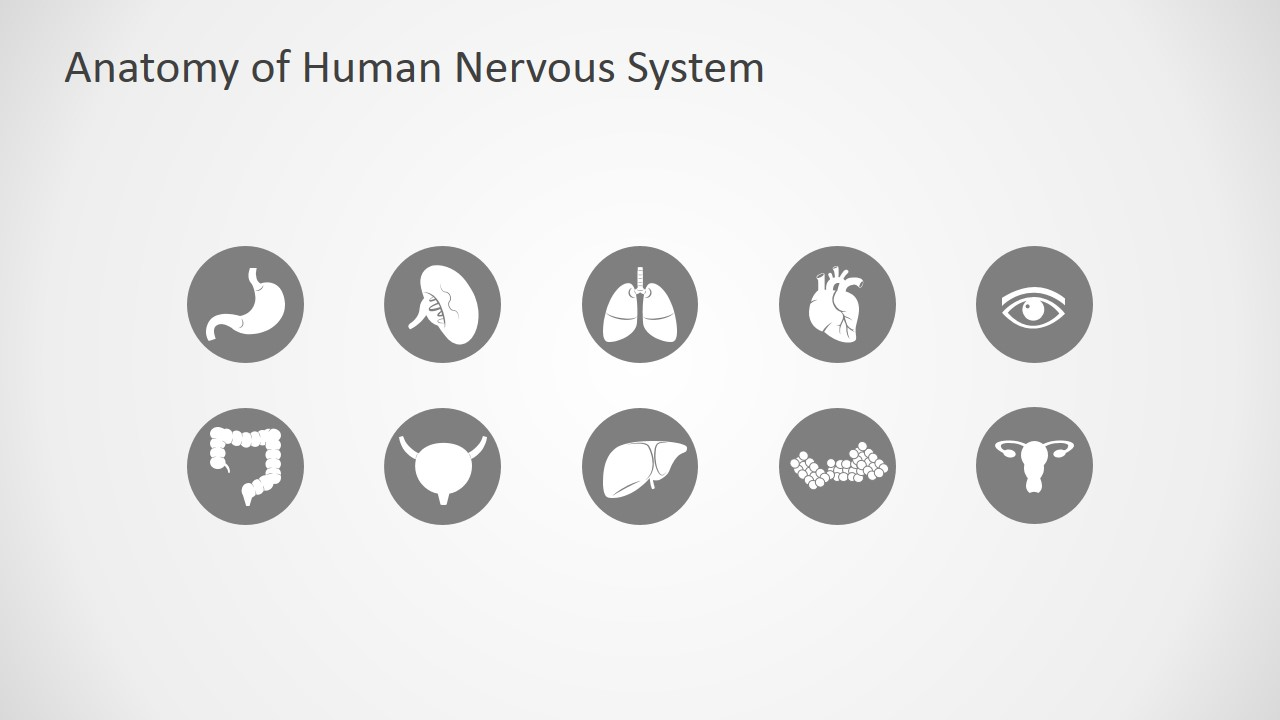 Anatomy of human nervous system slide design for powerpoint slidemodel human anatomy powerpoint templates toneelgroepblik Image collections