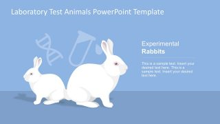 Animal Test Experimental Rabbits
