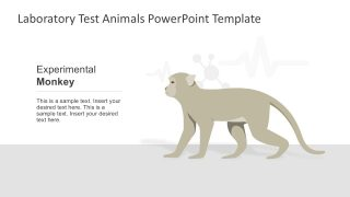 Laboratory Animals PowerPoint Template
