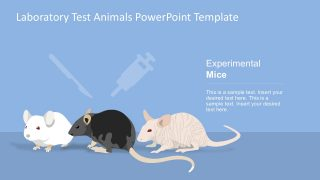 Laboratory Rats Testing PowerPoint