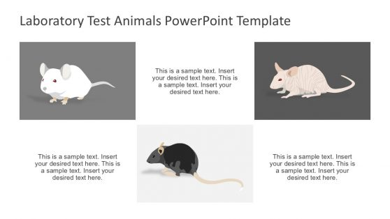 Rat Animal Scientific Testing PowerPoint