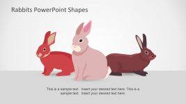 Long Pink Ear Rabbit