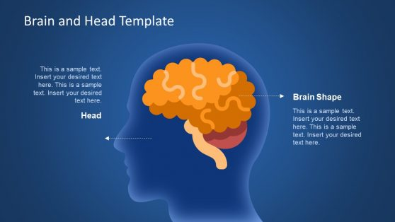 Brain Lobes Diagram in PowerPoint