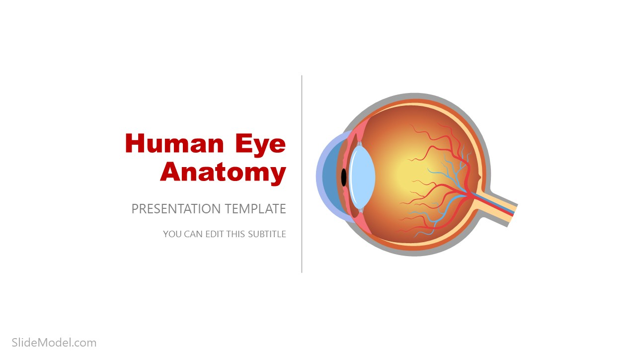 PPT Template for Eye Anatomy