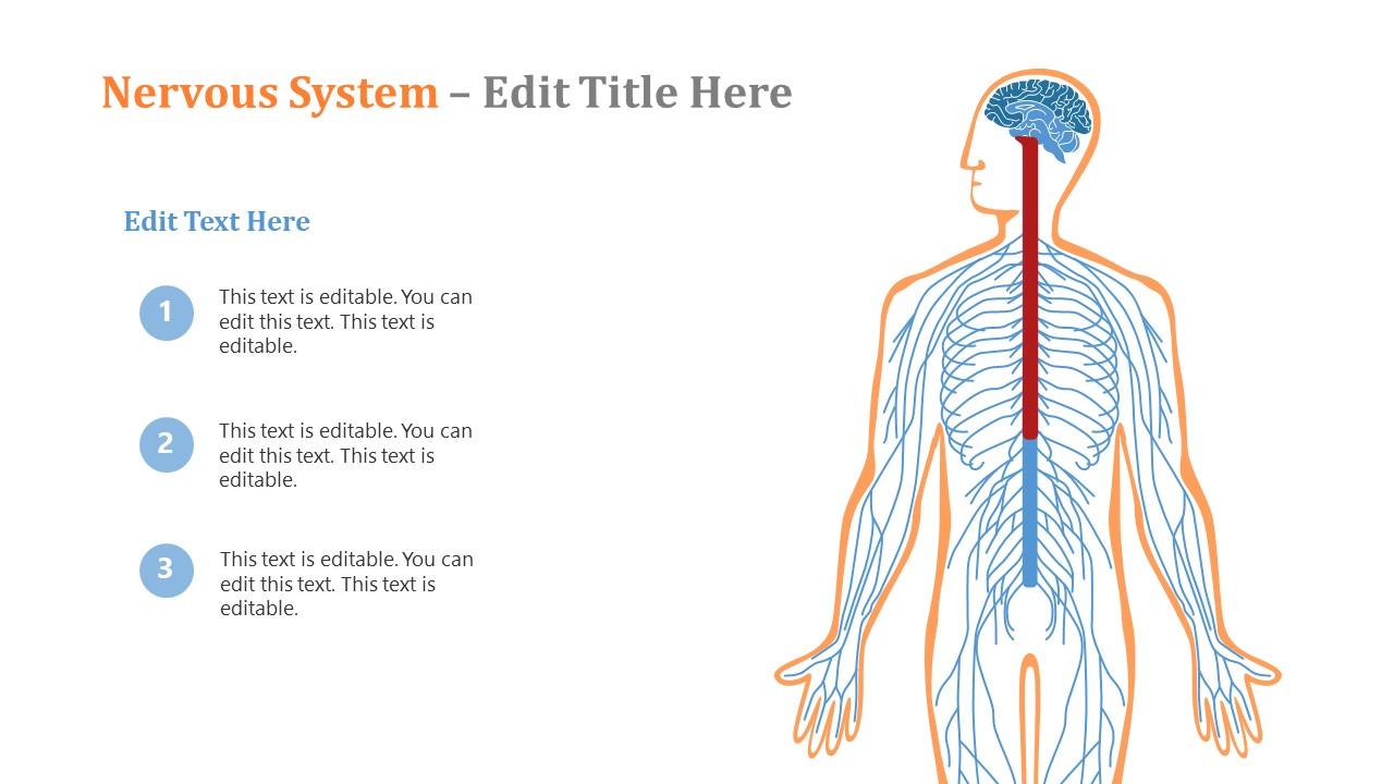 Presentation of Nervous System Human