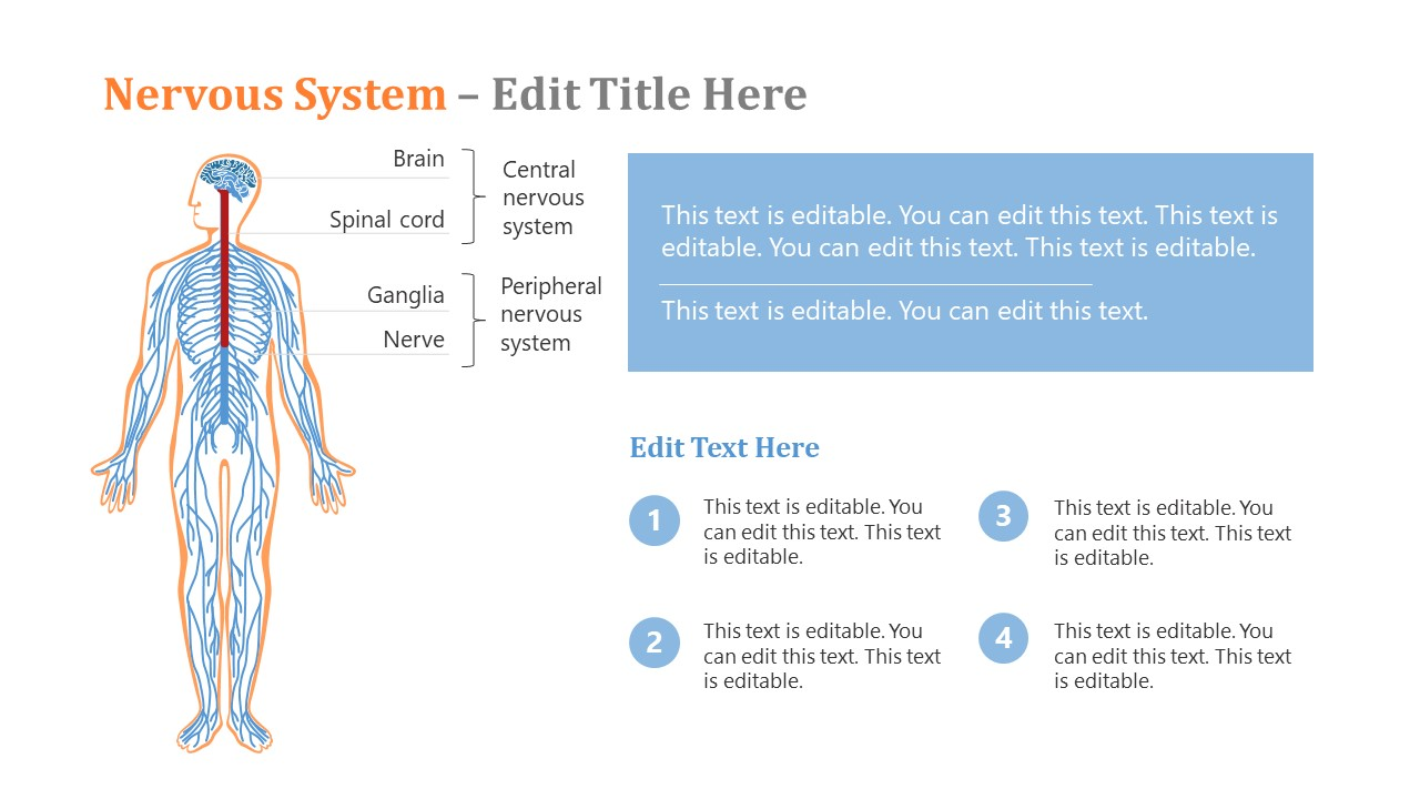 Anatomy of Human Nervous System PPT